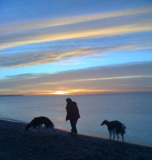 Strandspaziergang mit Windhunden
